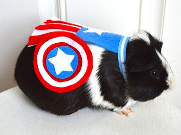 superhero-pet-1